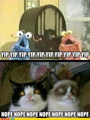 cat pictures funny grumpy cat pictures grumpy cat 65 pics grumpy cat ...