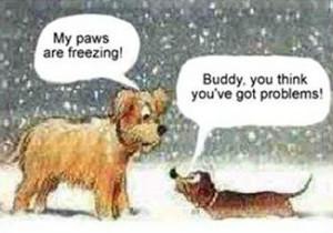 snowman dog a christmas dog story sponsored links freezing dogs