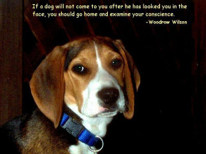dog quotes funny dog quotes and sayings cute dog quotes dog training ...