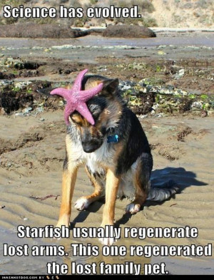 german shepherd - Loldogs - Dogs - Puppy Dog Pictures - I Has A Hotdog ...