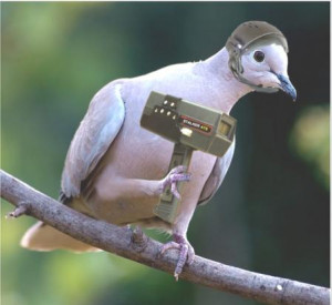 ... /funnypics/animals/pigeon/funny_pigeon_picture_18.jpg[/img][/url