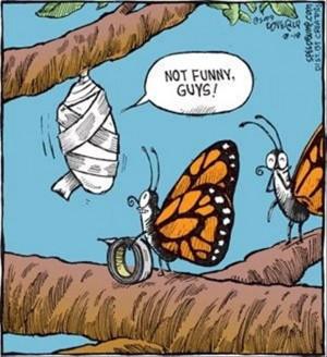Funny Butterflies Cartoon Joke Picture - Not funny guys