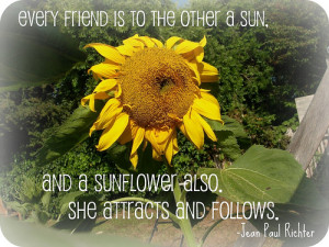 Tags: quote , sunflower , friendship