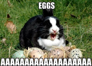 Funny Easter Bunny Quotes and Pictures (9)
