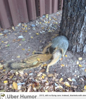 Just a squirrel trying to bust a nut guys, nothing new.
