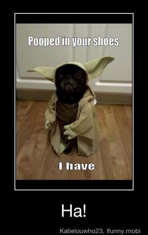 Star Wars Quotes Funny Yoda Funny Star Wars Yoda