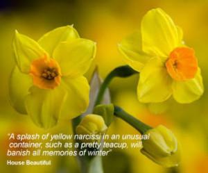 Flower quotes, flowers quotes, flower quote