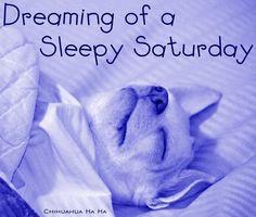 sleepy Saturday quotes quote morning saturday saturday quotes