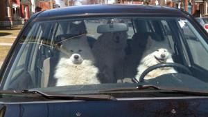 dog-roadtrip.jpg