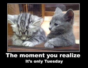 Its only Tuesday quotes quote cats days of the week cute kittens ...