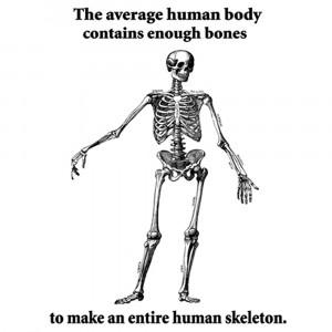 Funny Human Skeleton fact t shirt