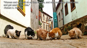 Community Post: 25 Inspiring Quotes For People Who Love Animals