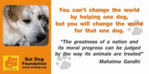 Stray dogs and pets are being illegally snatched, bought, or even ...