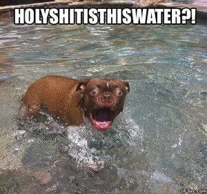 Surprised dog is surprised - Funny Pictures, MEME and Funny GIF from ...