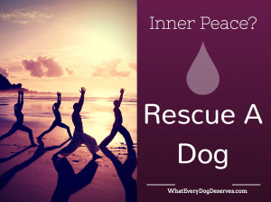 "17. ""Inner peace? Rescue a dog."