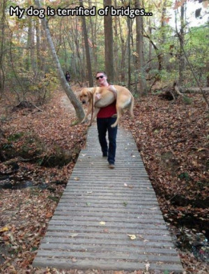 Funny Things All Dog Owners Will Relate To (37 pics + 1 gif)