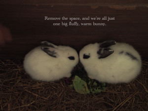 We are One Big Fluffy Bunny – No More Nice Girl