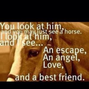 equestrian quotes and sayings horse quotes sayings