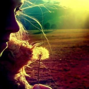 colors, flower, rainbow, sun...