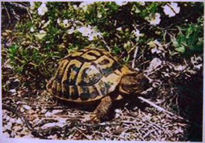 Being Lost In Life Quotes Tortoise about being lost