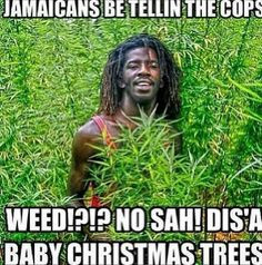 ... jamaican culture things jamaican jamaicans be like stuff quotes
