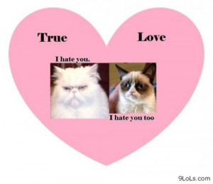 hate you Grumpy cat - Funny Pictures, Funny Quotes, Funny Videos ...
