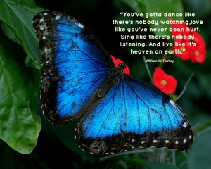 Quotes About Butterflies and Angels