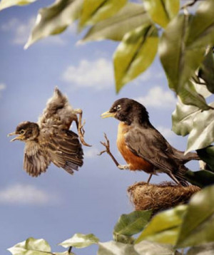 Nature vs Nurture: How do baby birds learn how to fly?