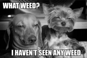 Cheech and Chong of the doggie cheeba world. Hahahaha!