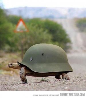 Funny photos funny turtle tortoise soldier helmet