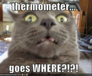 Funny Scared Animal Pictures – 25 Pics