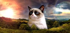 Tard The Grumpy Cat Grumpycat