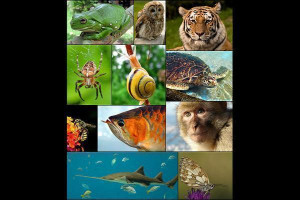 Image of Zoology