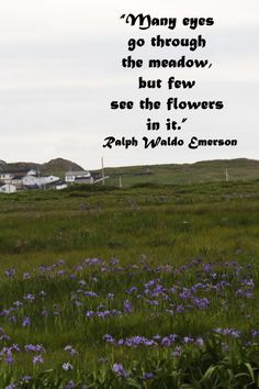 Many eyes go through the meadow, but few see the flowers in it ...