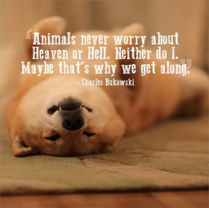 Great pet quotes10 Great pet quotes