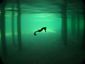 摄影师在洪都拉斯Roatán潜水时拍摄到这张空灵的海马 ...