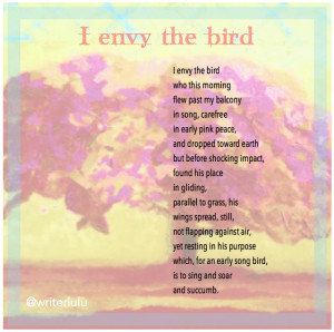 envy the bird