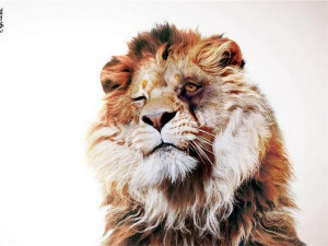 funny lion sarcastic sayings.