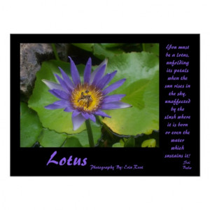 Lotus Poster with quotes from Sai Baba