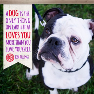 dog is the only thing on earth that loves you more than you love ...