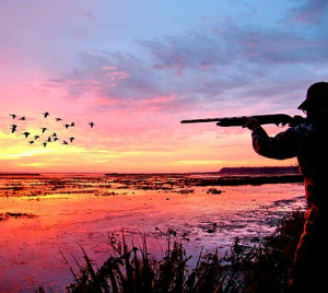 How Has Duck Hunting Changed Over Time?