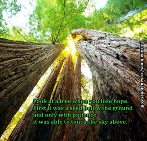 ... Seed that Became a Tree by Roxana Jones #quote #inspirationalpicture