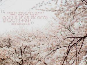 cherry blossom tree #cherry blossom #quotes #islam #imam hussain # ...