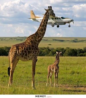 funny giraffe plane