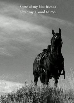 Inspirational Quotes about horses   Horse Quotes & Inspiration More