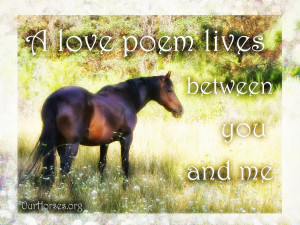 sad horse poems