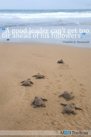 leadership #success #turtle #sea #quote