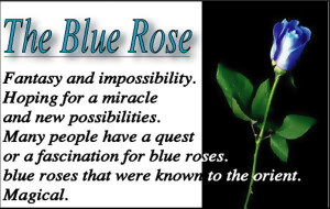 the blue rose photo blue.jpg
