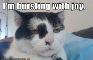 view funny cats the most hilarious pictures of funny cats download ...