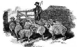Are You a Sheep or Sheepdog? Part I